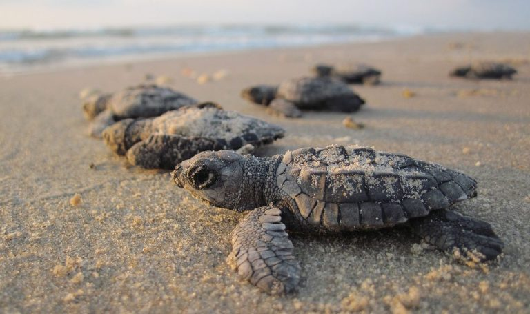 Fascinating Facts About Sea Turtles